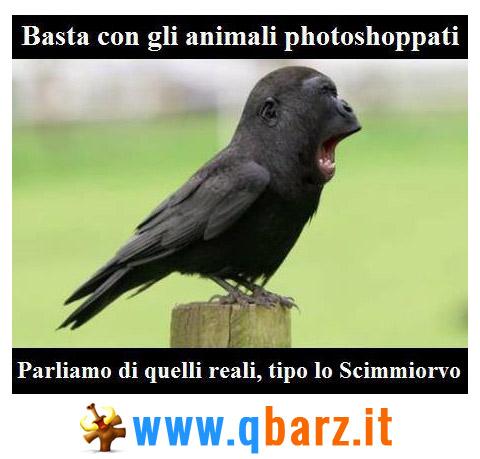 Animali Rari Foto Divertente