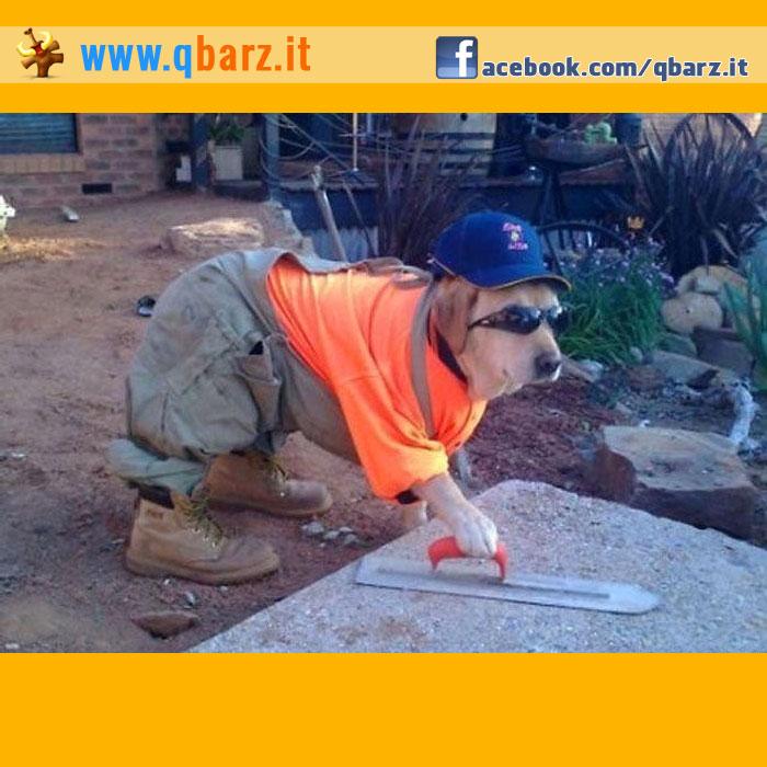 Per i lavori pesanti ci vuole un aiutante fidato