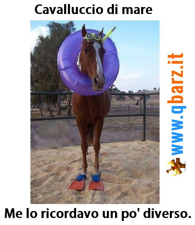 Cavalluccio marino