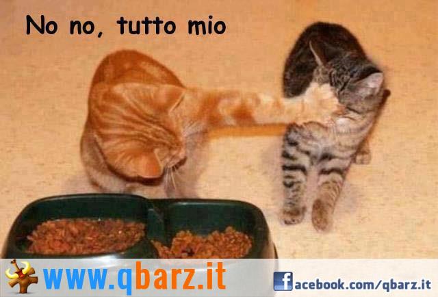 Bien-aimé Generosità tra gatti - Foto divertente LG75