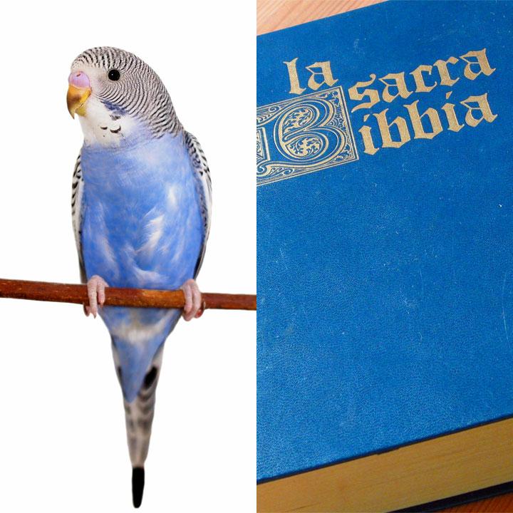 Preghiere e pappagalli